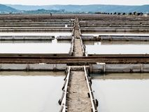 Salgue bandejas do sicciole, Pirano, Eslovênia, Europa Fotos de Stock Royalty Free