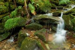 Salgueira flod som faller mellan stenar royaltyfria bilder
