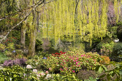 Salgueiro e flores Imagens de Stock Royalty Free