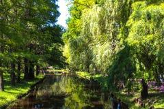 Salgueiro e rio no parque imagens de stock royalty free