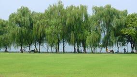 Salgueiros com a pastagem no lago ocidental Fotografia de Stock