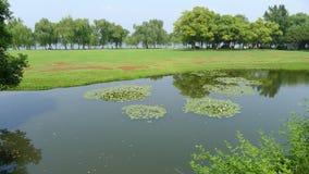 Salgueiros com a pastagem no lago ocidental Imagem de Stock