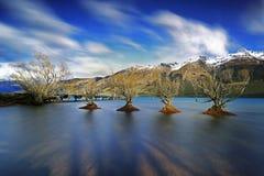 Salgueiros de Glenorchy das árvores Imagens de Stock