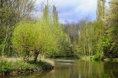 Salgueiros no riverbank Fotos de Stock Royalty Free