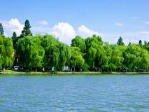 Salgueiros pela paisagem cultural do lago ocidental de Hangzhou imagem de stock