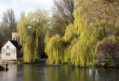 Salgueiros pelo rio Tamisa, Inglaterra foto de stock royalty free