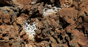 Sali la cristallizzazione alla costa del mar Morto, Giordania Fotografia Stock