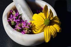 Salicaria del Lythrum della lisimachia immagini stock libere da diritti