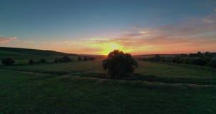 Salice al tramonto video d archivio