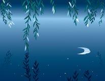 Salice alla notte Immagini Stock