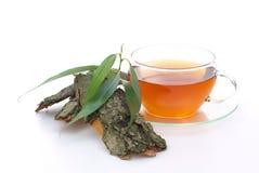 Salice del tè Fotografia Stock