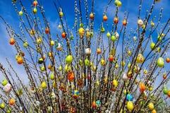 Salice dell'arbusto di Pasqua Immagine Stock Libera da Diritti