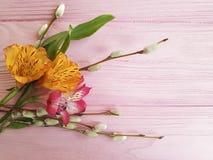 Salice di Alstroemeria su una festa di legno rosa del fondo di progettazione Fotografie Stock