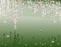 Salice di fioritura sopra la superficie dello stagno Immagini Stock