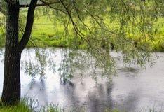 Salice piangente sopra il fiume Immagine Stock
