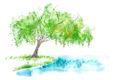 Salice piangente sul lago Estate illustrazione di stock