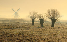 Salici in Olanda Fotografie Stock Libere da Diritti