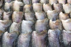 Salid Fish for sale Stock Photo