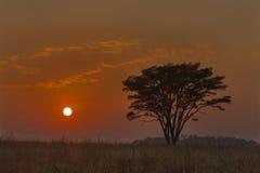 Salida del sol africana Fotos de archivo