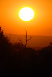 Salida del sol africana de la sabana Fotos de archivo