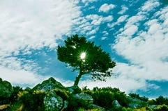 Salida del sol africana hermosa, con el árbol hermoso en el parque natural de Amboseli, Marruecos Fotografía de archivo libre de regalías