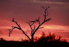 Salida del sol africana rosada Foto de archivo libre de regalías