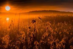 Salida del sol anaranjada sobre el campo del grano Foto de archivo libre de regalías