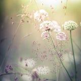 Salida del sol asombrosa en el prado del verano con los wildflowers Fotos de archivo libres de regalías