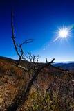 Salida del sol azul de la montaña de la ruta verde de Ridge Fotografía de archivo libre de regalías