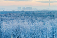 Salida del sol azul en madrugada muy fría del invierno Fotos de archivo