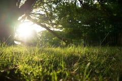 Salida del sol del bosque Imágenes de archivo libres de regalías