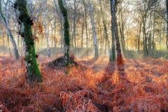 Salida del sol brillante en el bosque del helecho Foto de archivo
