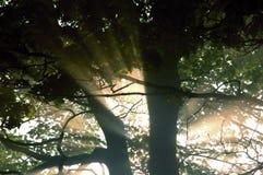 Salida del sol brumosa Imagenes de archivo