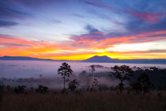 Salida del sol brumosa de la mañana en el parque nacional Phetch de Thung Salang Luang Fotos de archivo libres de regalías