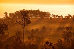 Salida del sol brumosa de la mañana en montaña en el nacional de Thung Salang Luang imagenes de archivo