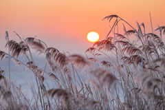 Salida del sol brumosa del invierno Fotos de archivo libres de regalías