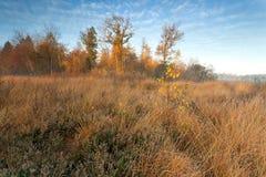 Salida del sol brumosa del oro en otoño Fotos de archivo libres de regalías