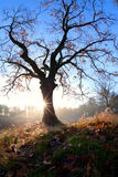 Salida del sol brumosa detrás del roble en otoño Foto de archivo