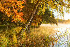 Salida del sol brumosa en el lago en la caída Foto de archivo libre de regalías