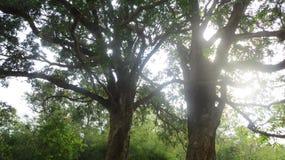 Salida del sol centrada entre dos árboles imágenes de archivo libres de regalías