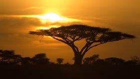 Salida del sol clásica en el parque nacional de Serengeti Imagen de archivo