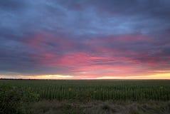 Salida del sol colorida con las nubes sobre el campo con los girasoles fotografía de archivo libre de regalías
