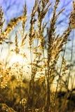Salida del sol colorida en el campo Imagen de archivo