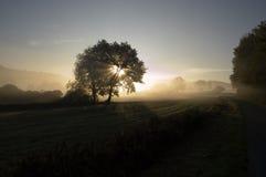 Salida del sol con el árbol Fotografía de archivo
