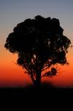 Salida del sol con el árbol imagen de archivo