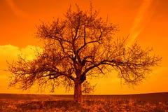 Salida del sol con el árbol Fotos de archivo libres de regalías