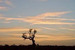 Salida del sol con el árbol derecho muerto fotografía de archivo libre de regalías
