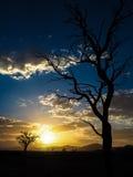Salida del sol con el árbol muerto Fotografía de archivo libre de regalías