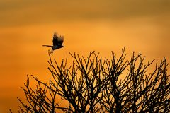 Salida del sol con el pájaro Fotografía de archivo libre de regalías