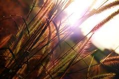Salida del sol con el prado y la niebla foto de archivo